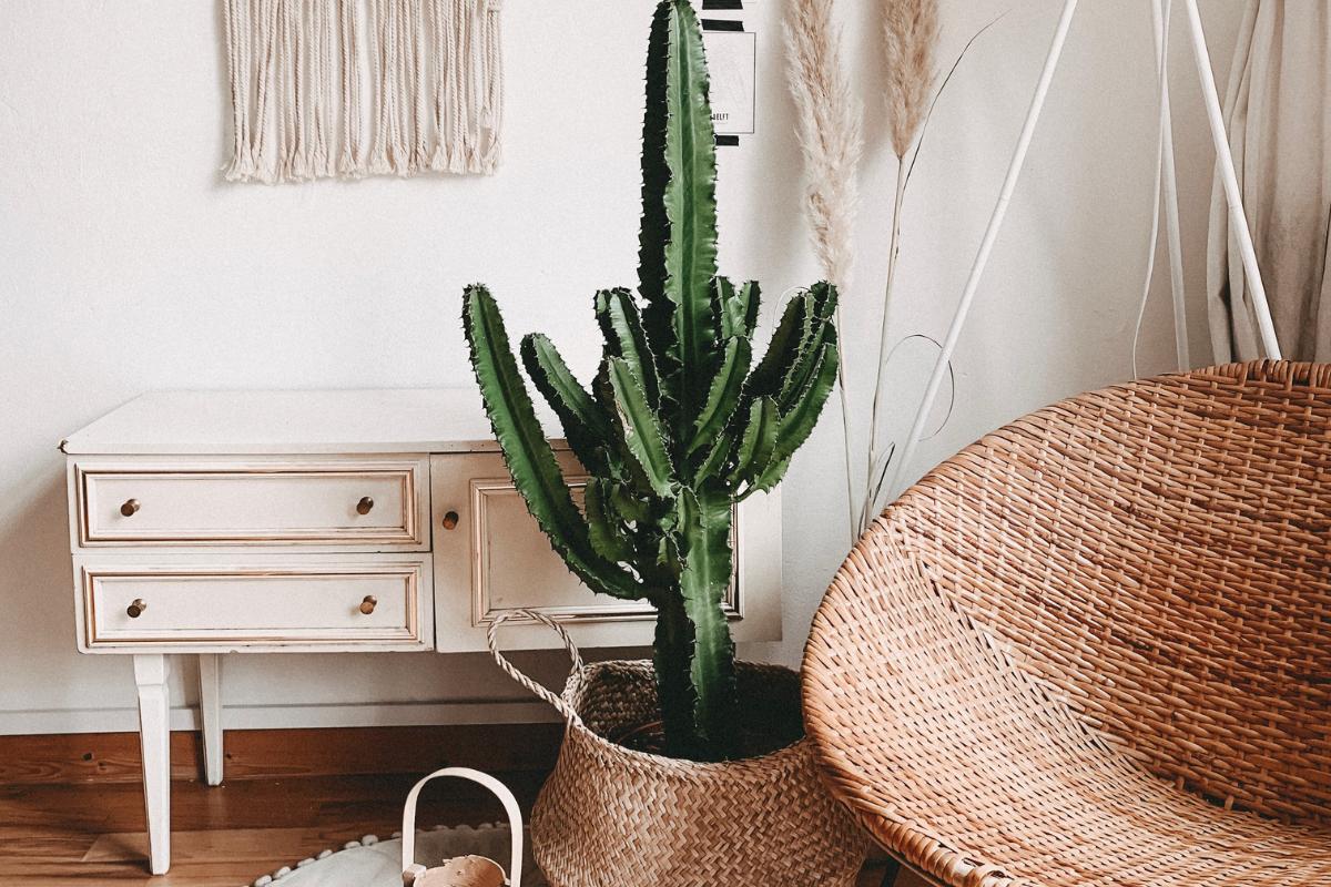 Op kamers? Deze goedkope kamerplanten overleven bijna alles!